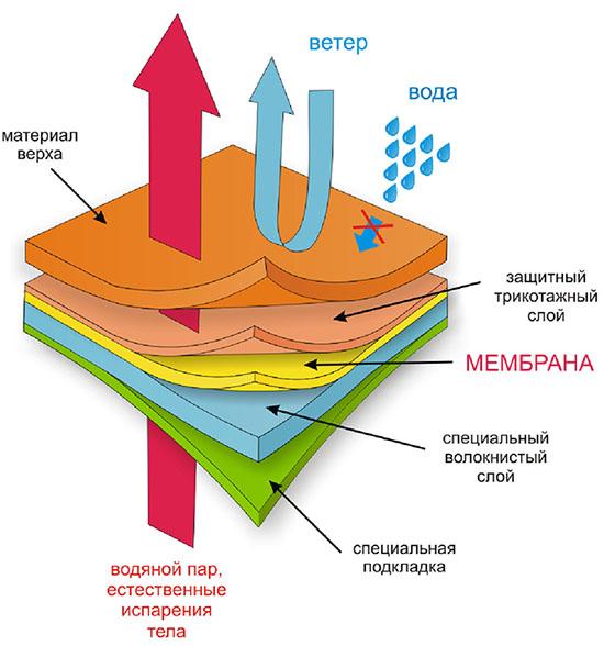 Как работает мембрана