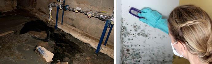 Как быстро и надолго убрать зловонных запах в подполье, погребе или подвале