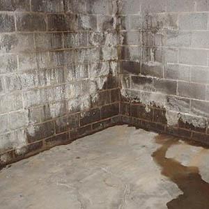 Как убрать плесень и грибок в подвальном помещении